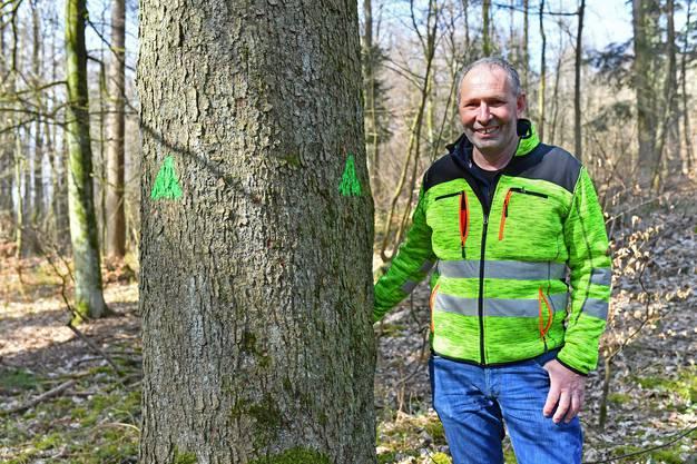 Revierförster Georg Nussbaumer mit einem Biotopbaum.