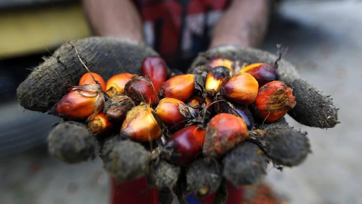 Mit einem Freihandelsabkommen mit Indonesien würde der Import von Palmöl in die Schweizer erleichtert. (Symbolbild)