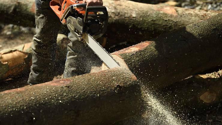 Holz ist ein nachwachsender Rohstoff und damit attraktiv für eine Reihe von Anwendungen. (Archivbild)