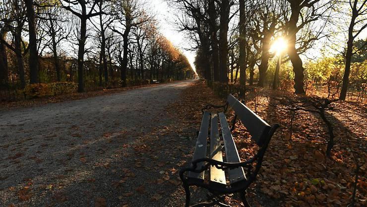 Die Sonne scheint durch die Bäume im Schönbrunner Schlosspark.  Österreich ist wegen der zuletzt explodierenden Corona-Infektionszahlen bis zum 6. Dezember erneut in einen Lockdown gegangen. Foto: Helmut Fohringer/APA/dpa