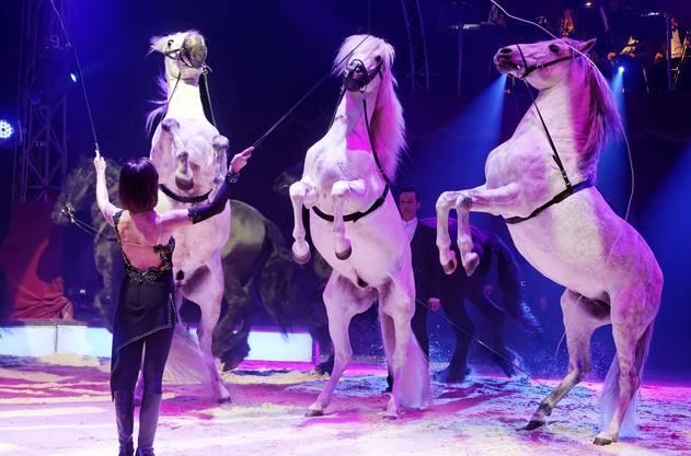 Seit Jahren betreibt Franziska Nock Tierdressur auf höchstem Niveau. Unter ihrer Leitung werden die beiden Kameldamen Fatima und Shakira gemeinsam mit sechs Pferden und zwei Eseln auftreten.