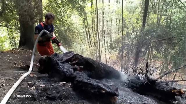 Lagerfeuer löst Flächenbrand am Üetliberg aus