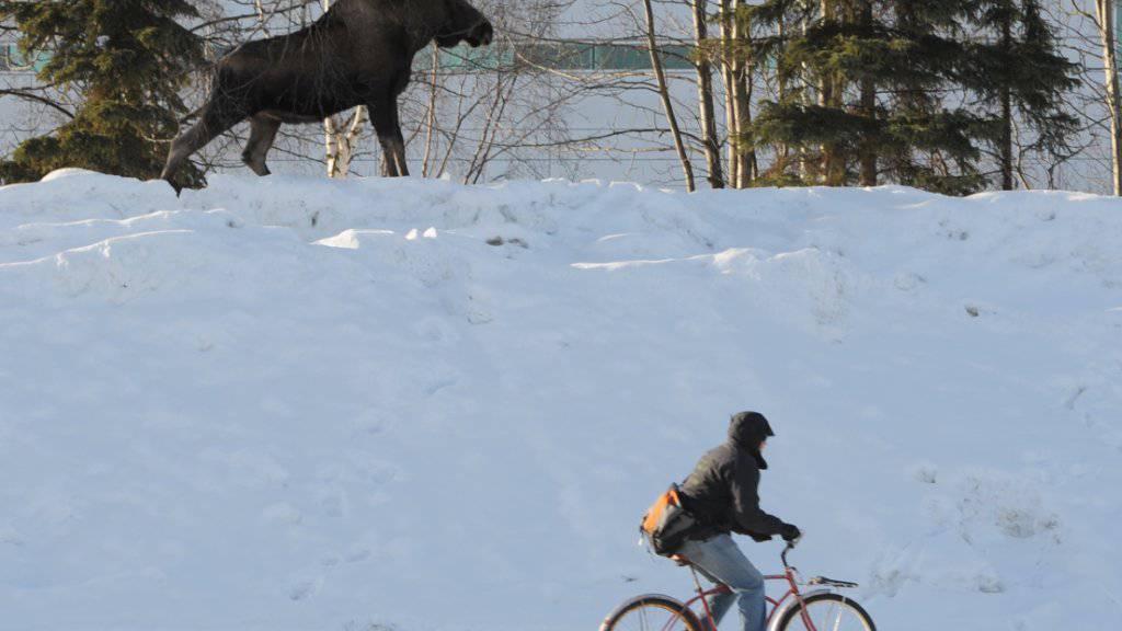 Alaska hat wegen der Erderwärmung viel mehr Schnee als vor der industriellen Revolution (Archiv)
