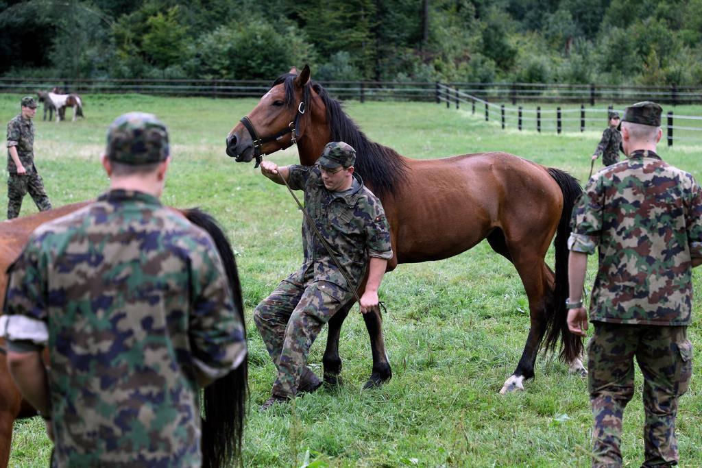 Pferde von U.K. in Schönbühl (© Keystone/Pascal Bloch)