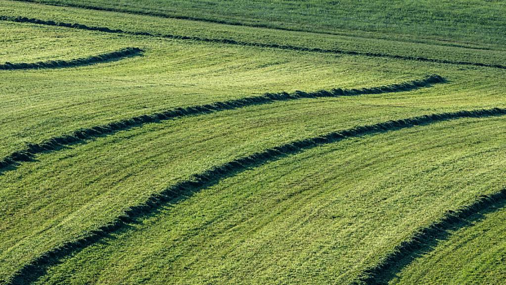 Geschnittenes Gras liegt auf einer gemähten Wiese.