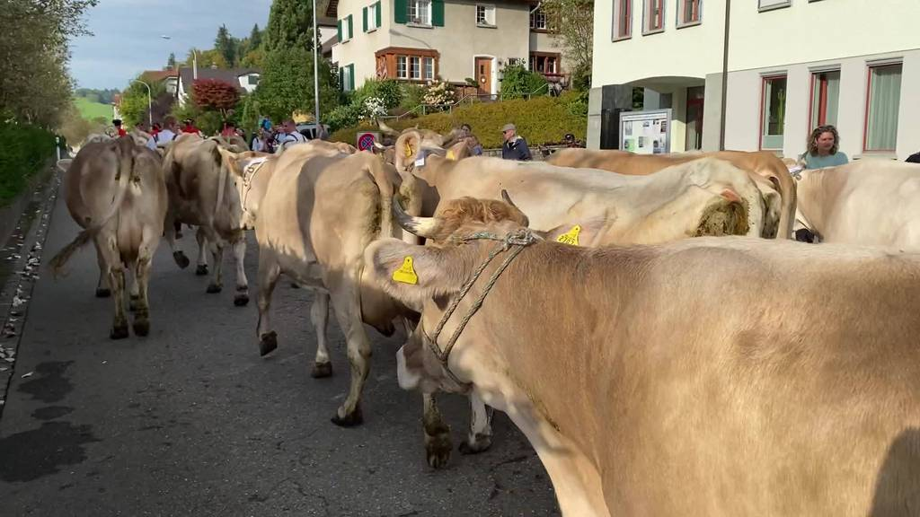 100-Jahre-Jubiläum: Viehzuchtverein St.Georgen feiert sich