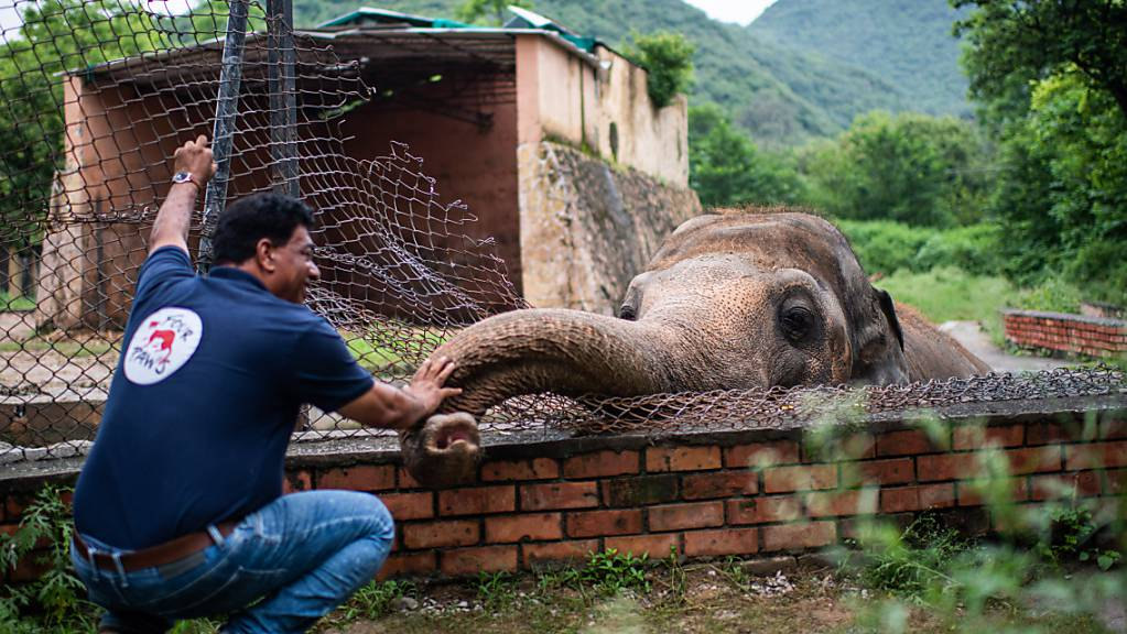 ARCHIV - Amir Khalil, Tierarzt der Tierschutzorganisation Vier Pfoten, begrüßt im Zoo Islamabad den Elefanten namens Kaavan. Foto: Arne Bänsch/dpa