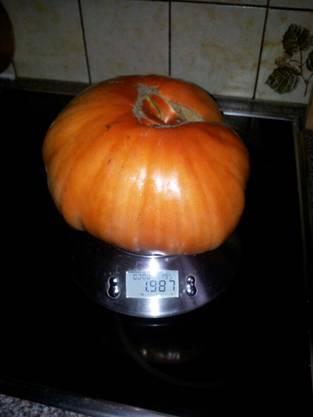 Diese Tomate bringt stolze 1987 Gramm auf die Waage.