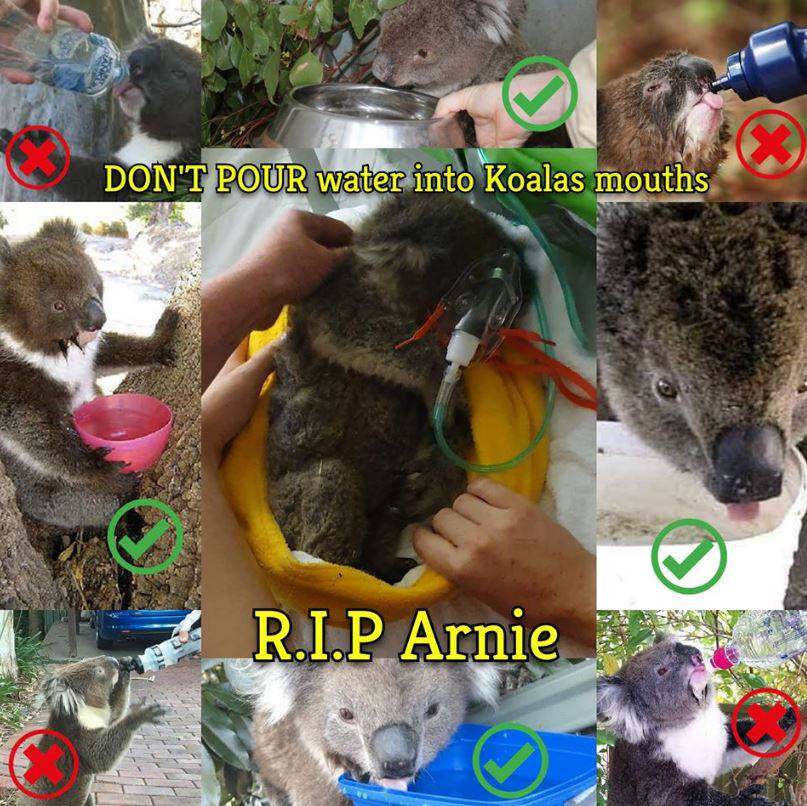 Koala RIP