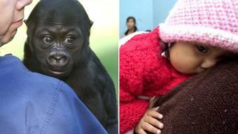 Babys von Affen und Menschen benutzen eine sehr ähnliche Zeichensprache