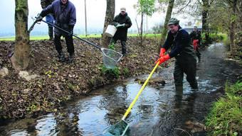 Wenn in der Region in den nächsten Tagen kein Regen fällt, müssen Bäche und Flüsse wohl abgefischt werden.