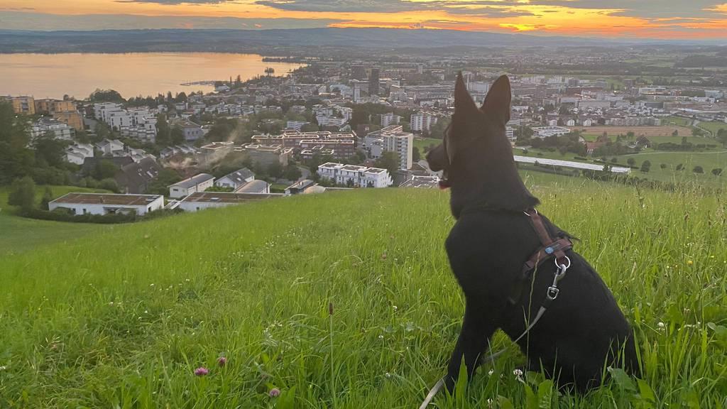 Zuger Polizei hat Hund «Kauz» ausgebildet