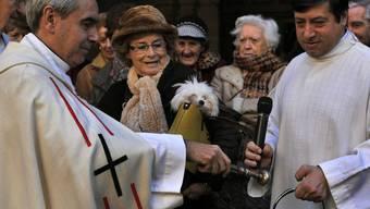 Spanische Priester segnen Haustiere