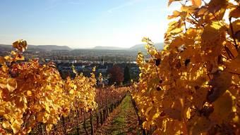 Prächtiges Herbstwetter in Klingnau: Blick vom Rebberg auf das Städtchen an der Aare im Herbst 2015.