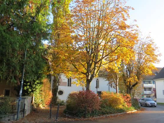 Hier die leuchtenden Bäume, dahinter die Reformierte Kirche.