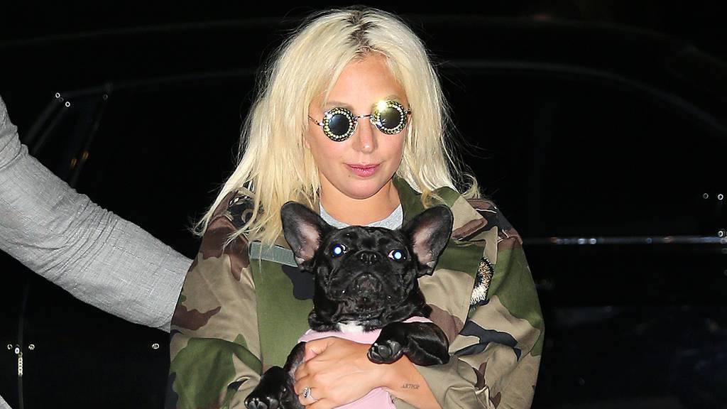 Hundesitter von Lady Gaga angeschossen – zwei Hunde entführt