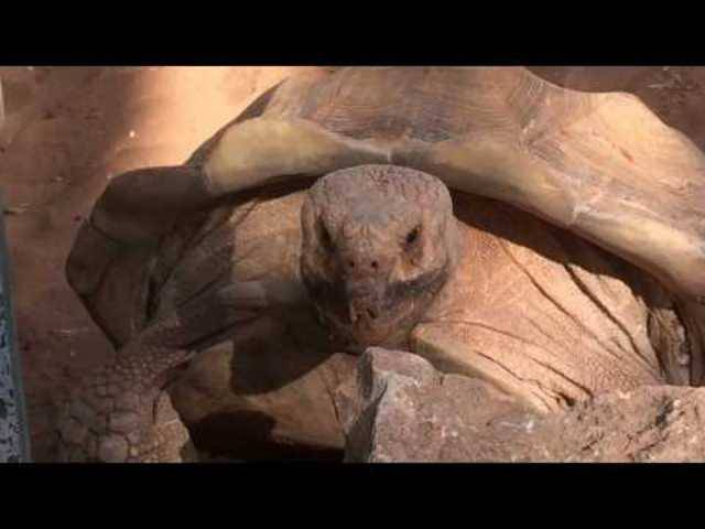 «Wow Wow Wow» – Diese Schildkröte geniesst den Sex sichtlich.