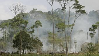 Brandrodung in Brasilien: Urwälder werden weltweit zurückgedrängt