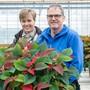 Yvonne und Adrian Huber ziehen jedes Jahr rund 15 000 Weihnachtssterne für den Advent.