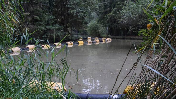 Die Sedimente werden über eine Leitung ans Ufers des Weihers transportiert.