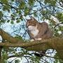 Eine Katze, die sich nicht mehr runter vom Baum traut.