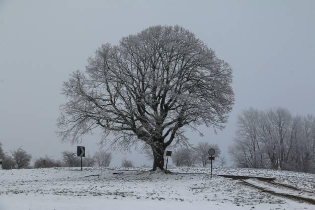 Bei der Staffelegg-Passhöhe zeigt sich der Winter in seinem weissen Kleid.