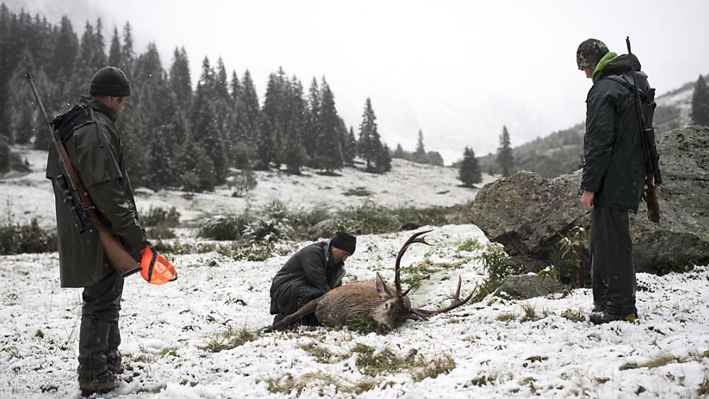 Auf der Sonderjagd müssen im Kanton Graubünden rund 2300 weitere Hirsche zur Strecke gebracht werden. (Archivbild)
