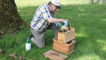 Peter Gautschi zügelt die Waben vom Vogelhaus in den Bienenkasten.