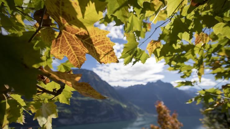 Herbstliche Stimmung auf dem Seelisberg mit Blick auf den Urnersee.
