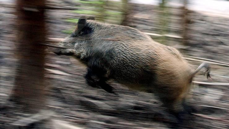 Jäger durchsuchten das Gebiet rund um die Autobahn. (Symbolbild)