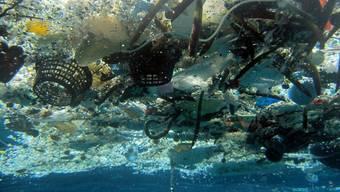 Plastik im Meer gefährdet Fische und Vögel - und gelangt über die Nahrungskette in unseren Mägen.