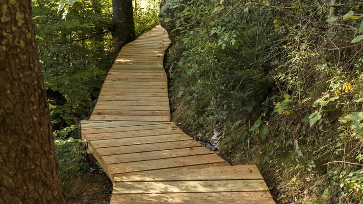 Auf dem Holzweg im Naturpark Thal – ein wunderschönes Naturerlebnis für die ganze Familie.