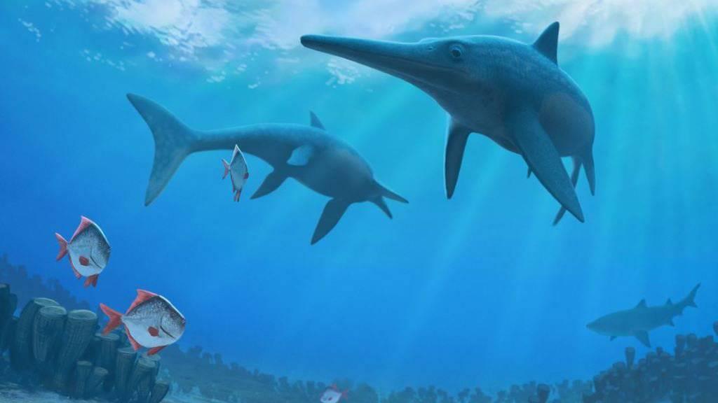 Die Delfin-ähnlichen Ichthyosaurier verschwanden vor rund 93 Millionen Jahren. Was zu ihrem Aussterben führte, haben Wissenschaftler nun ergründet.