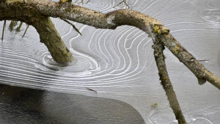Zeichnungen der Natur
