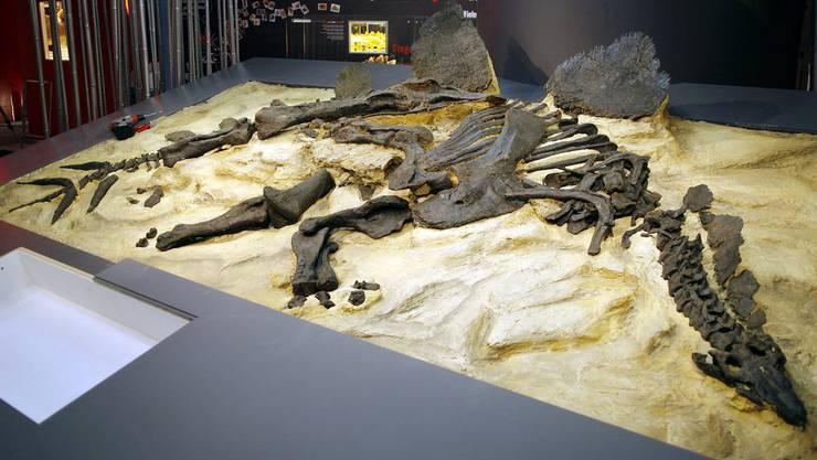 Hat zum Glück noch all ihre Knochen: Stegosaurier Lilly im Sauriermuseum in Aathal (ZH).