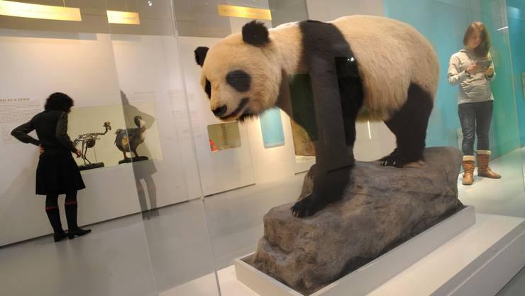 Müssen umziehen: Die Exponate aus dem Naturhistorischen Museum sollen in einen Neubau im St. Johann.