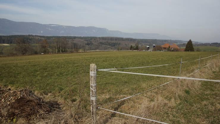 Auf diese Wiese soll der neue Reitplatz des Reitvereins Bucheggberg gebaut werden.