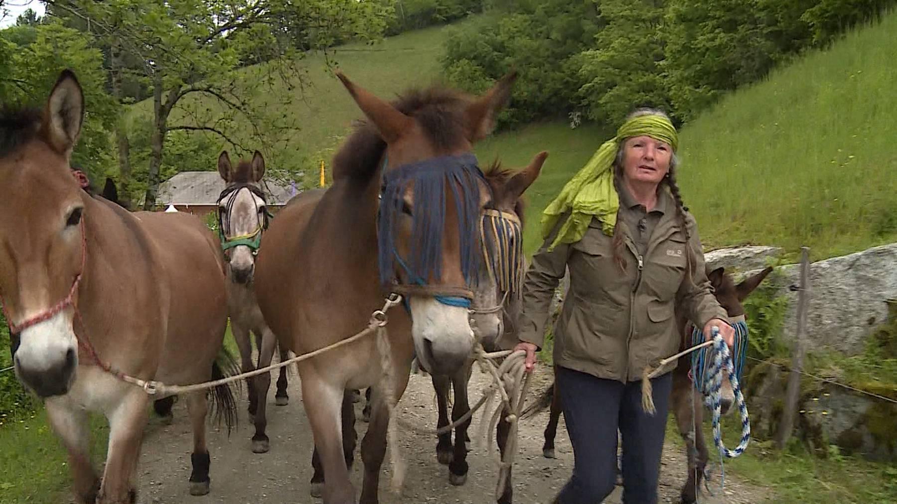Maultiere: Pferd oder Esel?