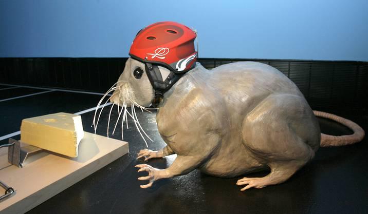 Geht es den Mäusen in Untersiggenthal bald an den Kragen? (Bild: «Die Mausefalle» war eines der Exponate im Deutschen Hygienemuseum)