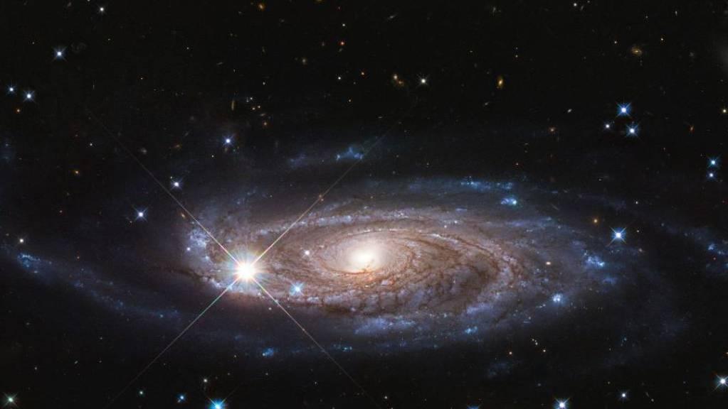 Die Galaxie UGC 2885 ist womöglich die grösste bekannte Galaxie im näheren Universum.