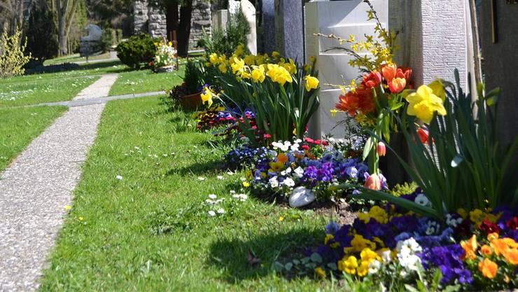 Farbenprächtige Oasen wie im Friedhof Rosengarten gibt es auf öffentlichem Grund in Aarau nicht allzu viele.