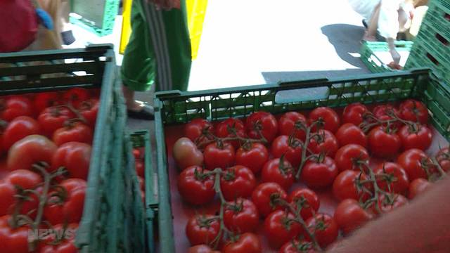 Anti-Foodwaste-Aktion rettet 30 Tonnen Tomaten