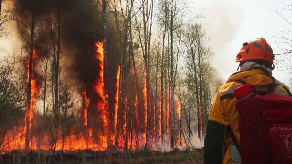 Waldbrände in Russland: Militär schickt zusätzliche Technik