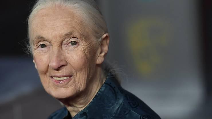 Die Universität Zürich verlieh der Affenforscherin Jane Goodall die Ehrendoktorwürde. (Archivbild)