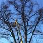 Im Bally Park müssen regelmässig Bäume gefällt und neu angepflanzt werden.