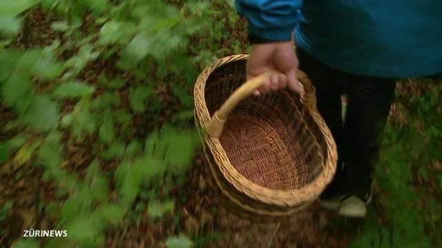 Sammelfrust: 80 Prozent weniger Pilze