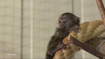 Der Affennachwuchs im Tierpark Ambigua ist getauft.