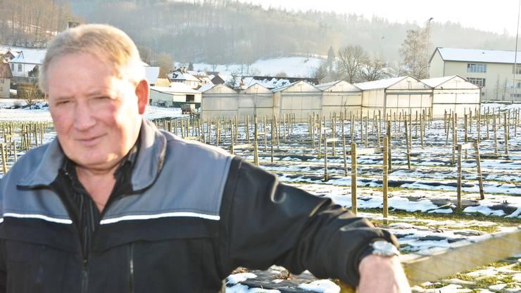 Landwirt Robert Meyer vor seiner Himbeerkultur, die er decken wollte. Im Hintergrund stehen bereits Gewächshäuser.Toni Widmer