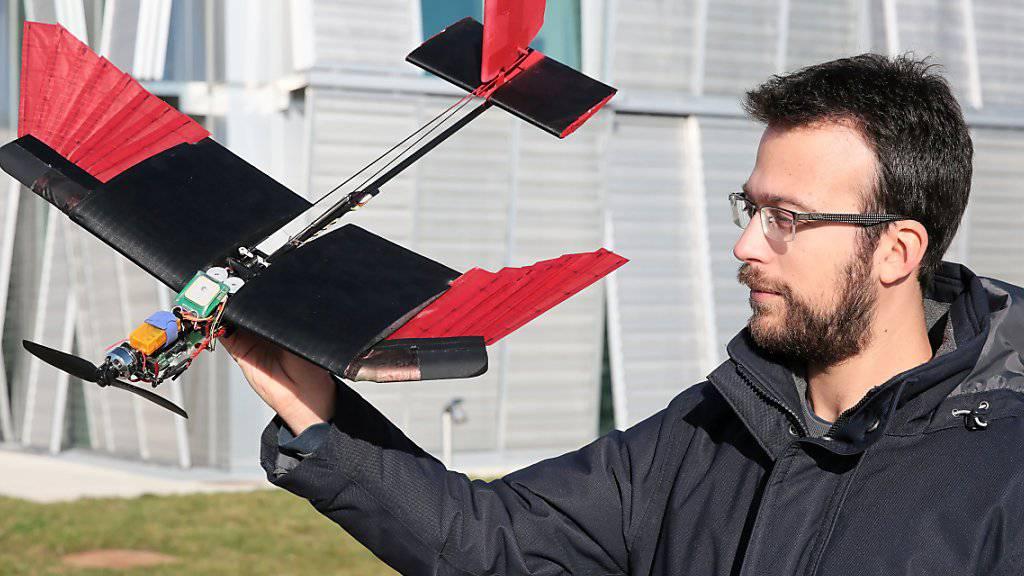 EPFL-Forscher Stefano Mintchev mit der neu entwickelten Drohne. Die künstlichen Schwungfedern (rot) an den Flügeln lassen sich ein- oder beidseitig zusammenfalten oder ausfächern.