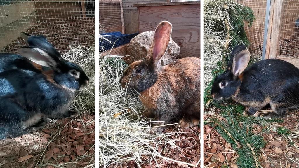 Kaninchengruppe